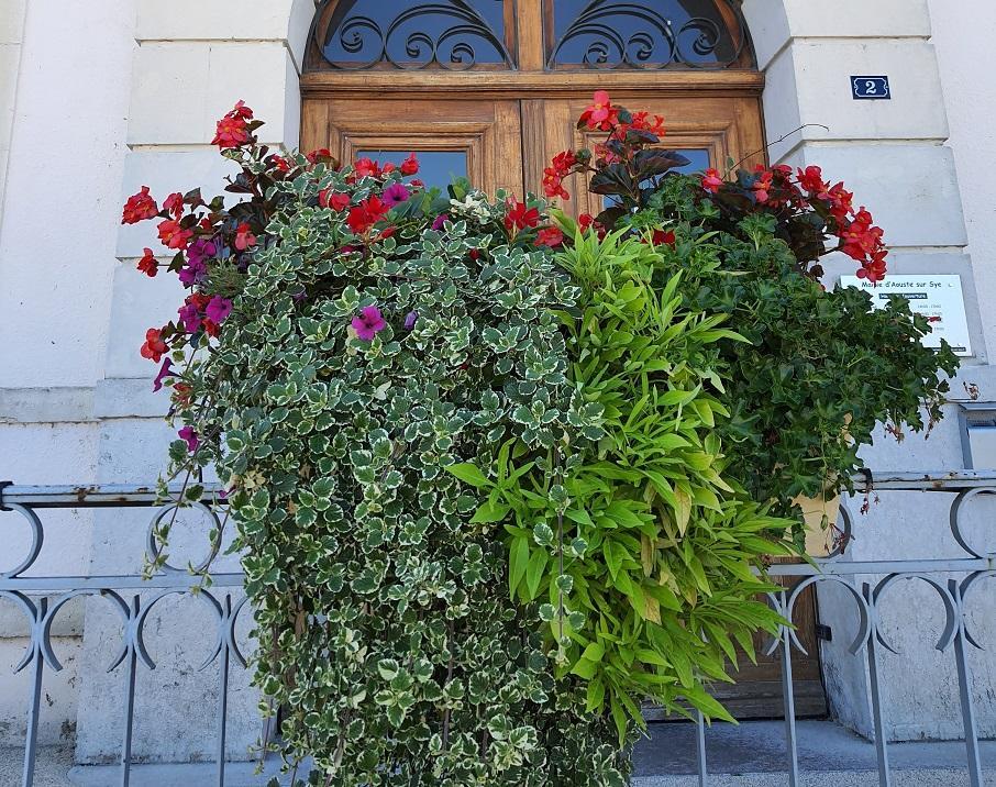 Plantes d ete