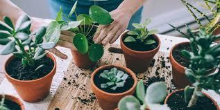 Rencontre plantes